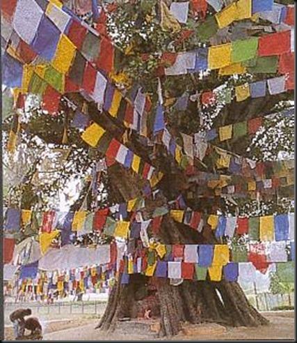 arbre_bodi